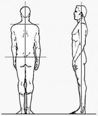 Posture and rear side views