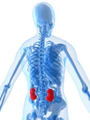 Lower back pain kidneys Lilliput Health Poole
